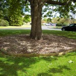 A shade covered lawn, solved by using woodchip around the tree