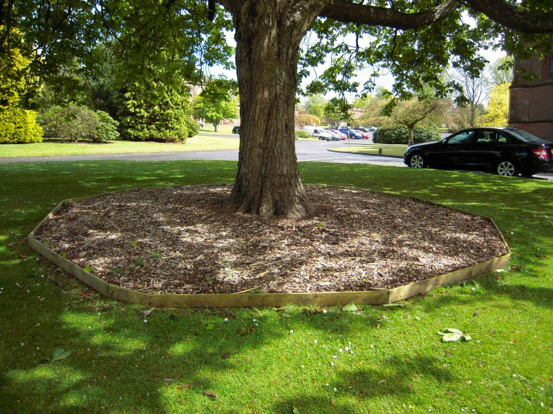 How To Grow Grass In Shaded Areas