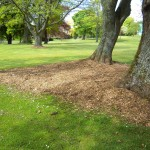 Shady grass area, covered by Woodchip
