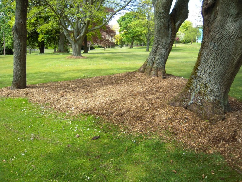 Grass For Shade: Growing a Good Lawn in Shady Areas