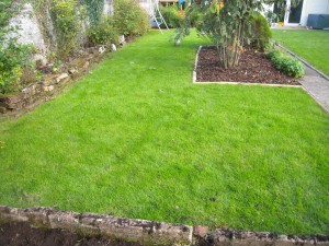 Lawn renovation by lawns for you