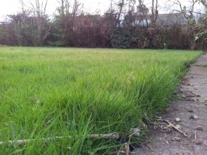 My Lawn: Ripe for a Lawn Care Programme