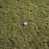 Grass types and how they affect Lawn Care