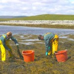 bowling green dry patch can be dealt with using seaweed and other methods