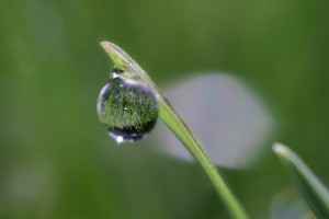 A droplet of water clinging to grass