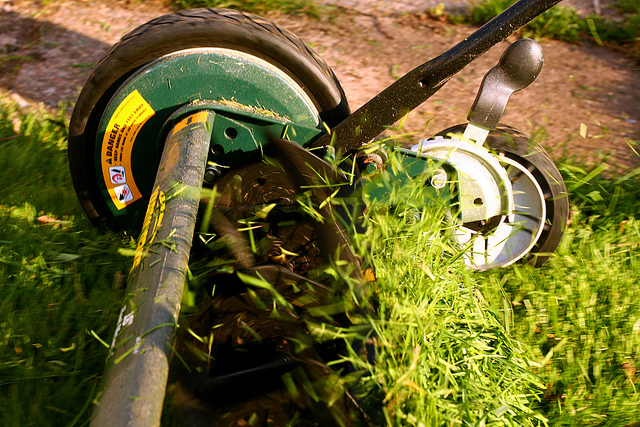 Lawn Update & Checking Your Lawn Mower Blades