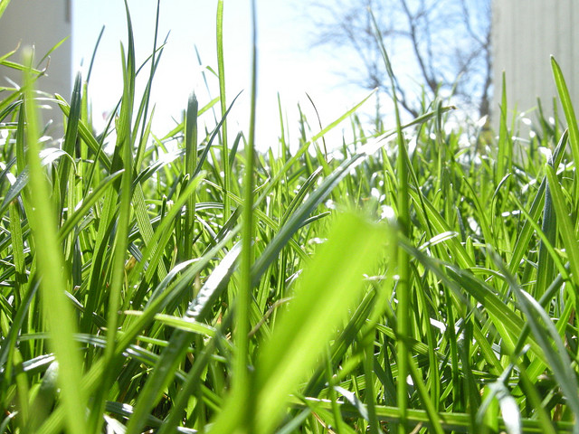 How light is essential for a green lawn