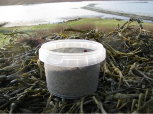Organic edible seaweed - a salt substitute for your food