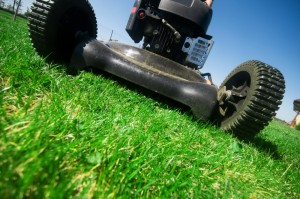 Autumn is the time to start preparing your lawn for a harsh winter season