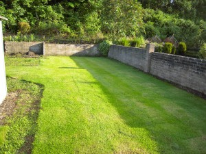 A newly turfed lawn, completely covered in grass turf