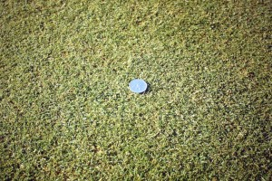 Seaweed Fertiliser's effect on a patch of grass - green lawn grass with one application