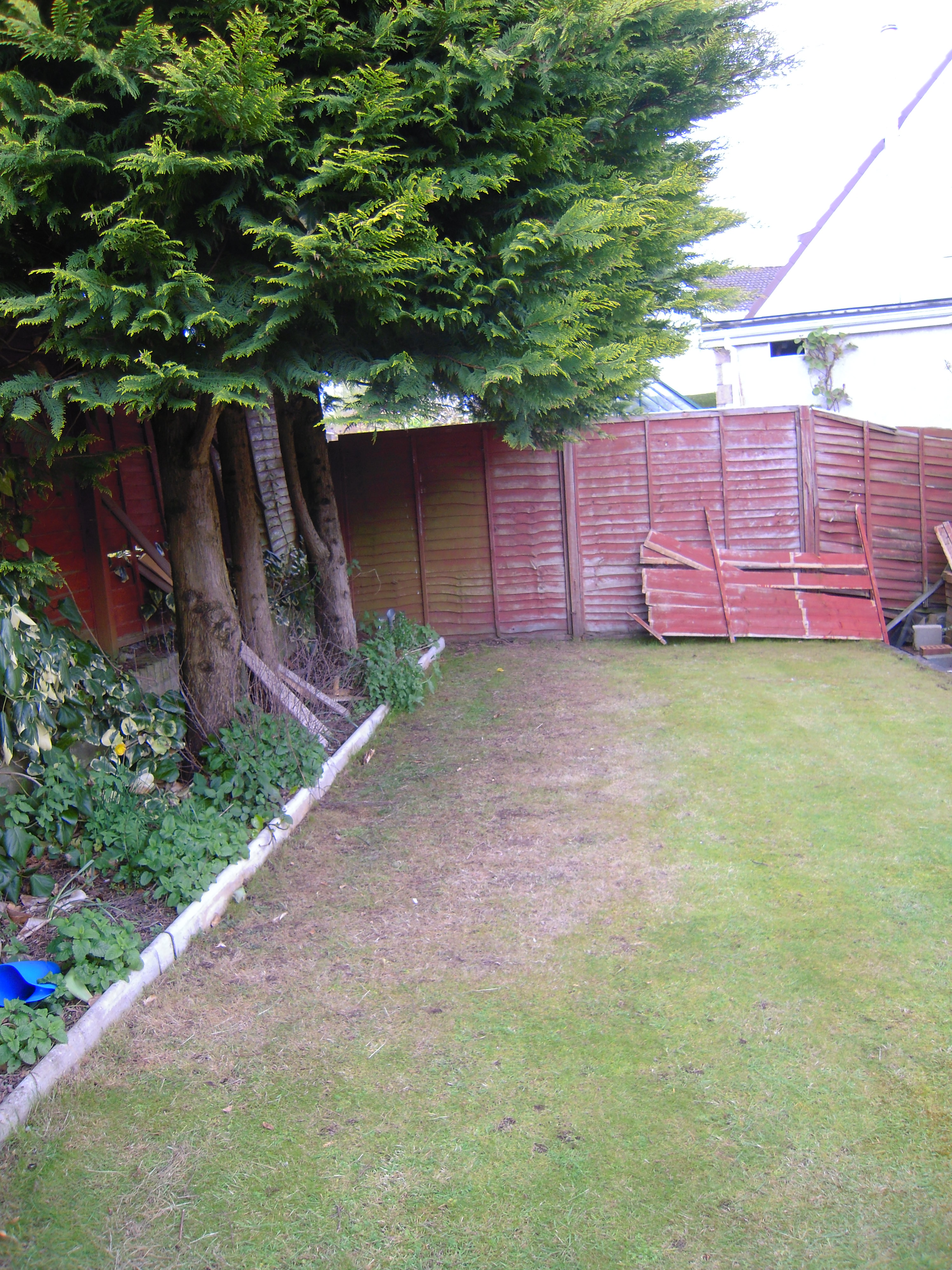 Grass For Shade Growing A Good Lawn In Shady Areas