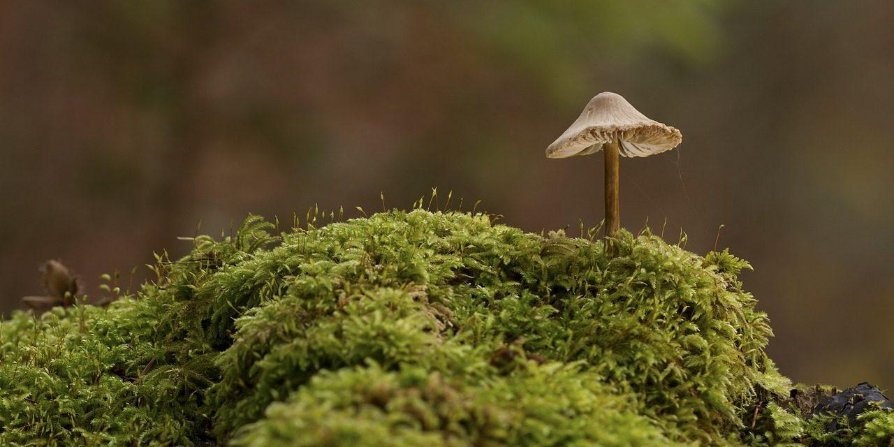 stoned worden van mos