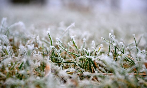 What to do on your lawn in Winter. PART TWO.