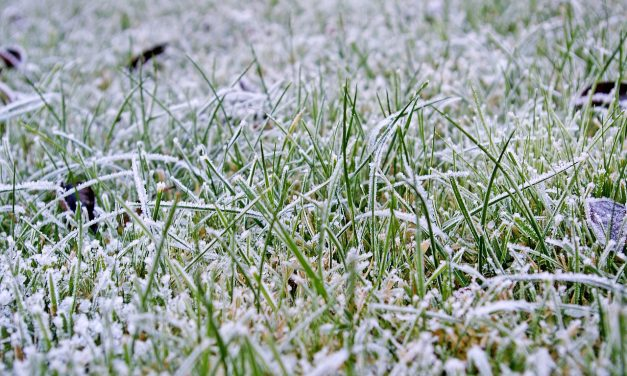 Why a lawn needs attention in Winter, Part one.