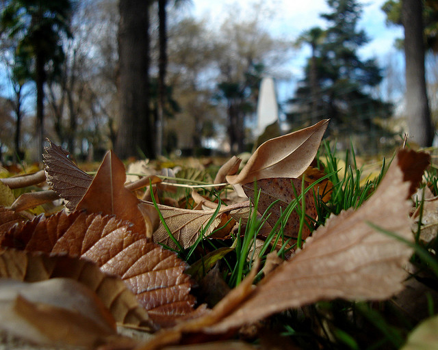 Autumn Lawn Care: Fertilising for Winter and Moss Removal