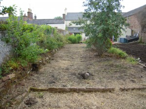 Before - Lawn renovation