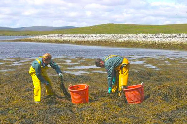 Seaweed as a Lawn and Garden Fertiliser: The Benefits and Uses