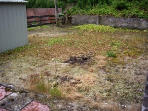 a lawn following application of weedkiller - wilted yellow grass