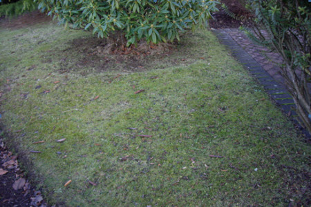 This lawn is in heavy shade, and of awkward shape - hence the heavy growth of moss.