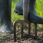 Using a fork to prepare your soil for turfing or seeding