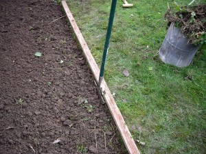 A half moon edger being used for lawn edging in winter