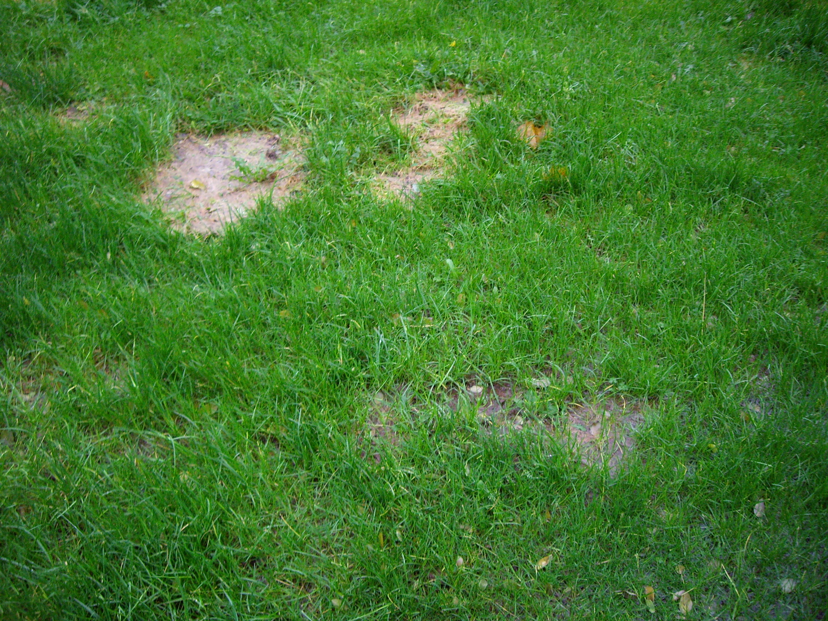 Lawn Mowing And Moss Control Over The Winter Grass Care
